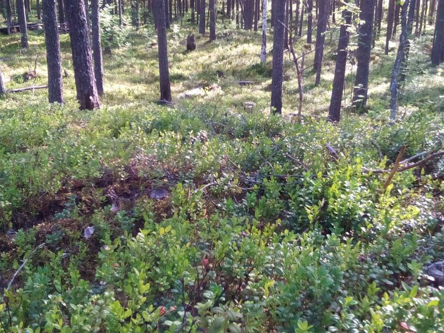 Земля Карельского леса