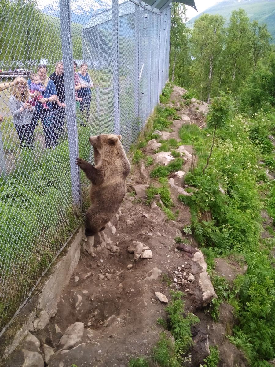 Наши бабы кормят медведиху морквой