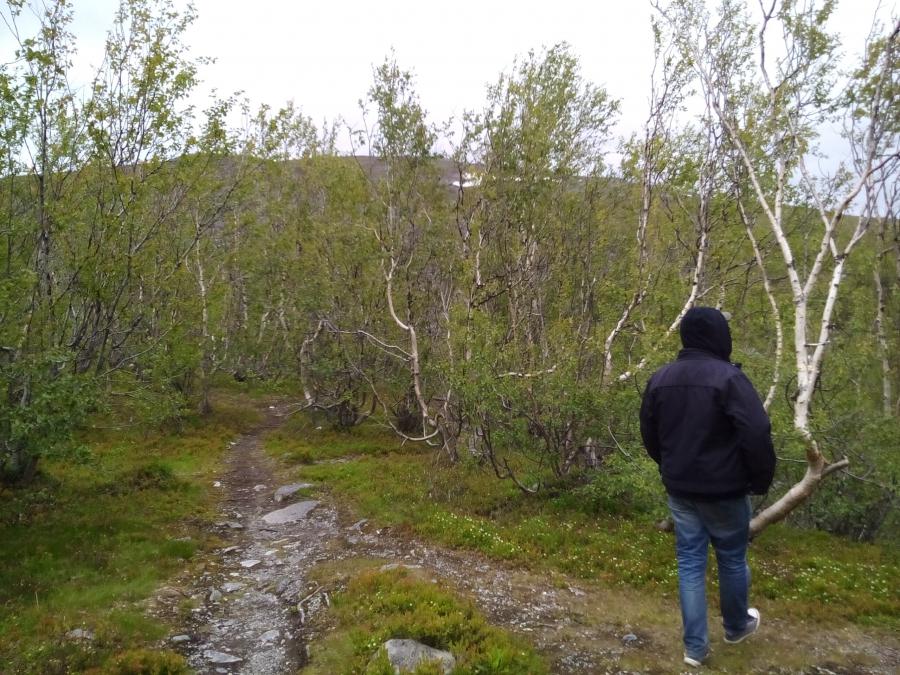 Лес карликовых берез